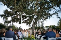 outdoor wedding|tree draping
