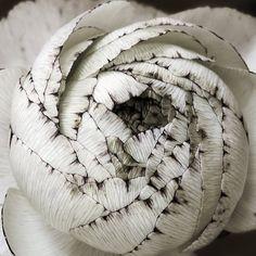 ~~ Ranunculus ~~