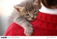 Kediler sadece sevdikleri ve güven duydukları insanlara kafalarını yaslarlar.