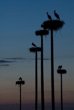 Storks' Nests at Dusk in Spain | Flickr - Photo Sharing! --Elsie RC