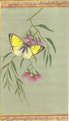 Indian Butterfly in bloom Miniature Painting.