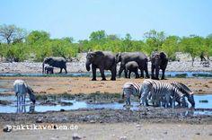 Die Wasserlöcher im #Etosha Nationalpark in #Namibia sind mit die besten Orte für's #WildlifeWatching