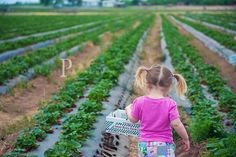 Strawberry Picking :)