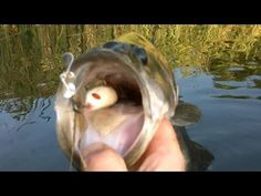 Buzz the Mouse and Lunker Lizard - Topwater Largemouth Bass