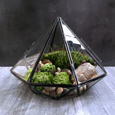 Modern geometric terrarium in the shape of a diamond, planted with several species of live woodland moss.