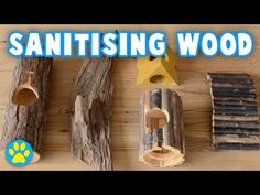 How To Clean Wooden Pet Supplies Pratical Life Hamster Stuff, Hamster Care, Hamsters, Rodents, Rat Care, Cleaning Wood, Royalty Free Music, Guinea Pigs, Mice