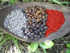 PITTEN, ZADEN, IN EEN MARIPABAST. FROM THIS SEEDS WE MAKE ALL THE JEWELRYS, ARE FOR SALE.  CARRY
