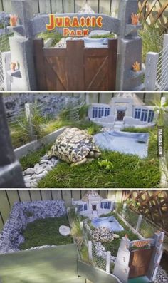 Jurassic Park for Louie the Leopard Tortoise