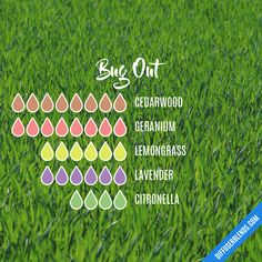 Bug Out — Essential Oil Diffuser Blend