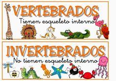 Resultado de imagen de cartel de animales oviparos