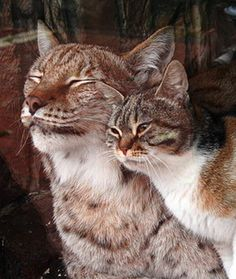Stray kitty finds new friend at the zoo....they both have such sweet looks on their faces!!