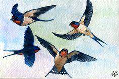 Barn Swallows Study by twapa on DeviantArt