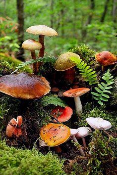 Fairy House - #Mushrooms