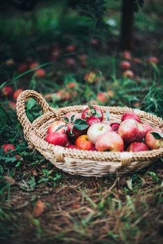 apple picking in charlottesville, va | willfrolicforfood.com