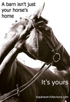 Why horses for trauma? Equine therapy for foster and adopted children- Stable Moments. Equine Quotes, Equestrian Quotes, Horse Quotes, Equestrian Problems, Horse Sayings, Equestrian Style, Animal Quotes, Horse Girl, Horse Love