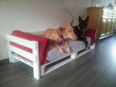 Wide Pallet #Dog #Bed with Cushion - 25 Unique DIY Wood Pallet Projects | 99 Pallets