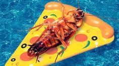 Weird Instagram Follows The Adventurous Life Of a Cockroach http://ibeebz.com