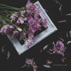 Veronica, Flower Art, Art Photography, Bloom, Flowers, Painting, Instagram, Art Floral, Fine Art Photography