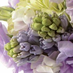 Un bouquet di tulipani