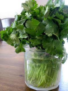 How to keep cilantro fresh longer