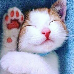 I love cute cats and kittens 'cuz they bring me happiness. Cute Cats And Kittens, I Love Cats, Crazy Cats, Cool Cats, Kittens Cutest, Pretty Cats, Beautiful Cats, Animals Beautiful, Cute Animals
