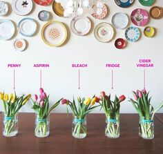 spoiler alert: just pop them in the fridge at night >>> Test Lab: The Best Way to Keep Flowers Fresh | Apartment Therapy