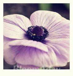 Purple anemone polaroid vintage