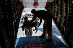 Dog drop handlers and Ryan Air employees load 72 dropped dogs into a CASA airplane at the Galena airport during the 2017 Iditarod on Friday afternoon March 10, 2017.Photo by Jeff Schultz/SchultzPhoto.com (C) 2017 ALL RIGHTS RESERVED