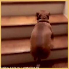 Steadily heading up – hot #GifHumor, #GifsAnimationFunny, #GifVideos, #HumorGifFunny | #AwesomeGif, #FriendshipGifsFunny, #GifsHilarious, #LoveGif, #PrankGif