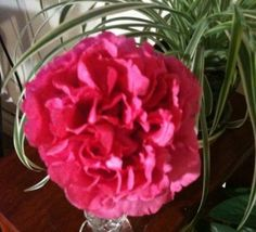 From Joyce's garden#Pin By:Pinterest++ for iPad#