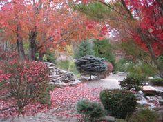 Colorful fall foliage in East Peoria, Illinois