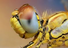Macro Photography. Wow. Talk about details.