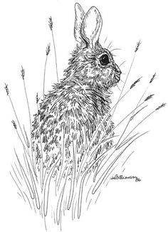 rabbit drawings google search rabbits pinterest rabbit