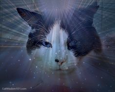 Cats are magical like Domino.