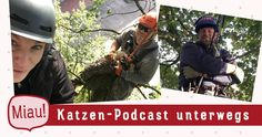 Ich war für den Katzen-Podcast auf einer Eiche, um mir anzusehen, wie eine Katzen-Baumrettung funktioniert. #Katzen #Baumrettung #Podcast