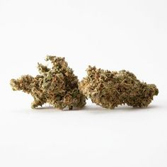 Marijuana Flowers UK | Buy Marijuana Flowers Online at Amsterdam weed Marijuana Plants, Cannabis Plant, Cannabis Oil, Flowers Uk, Flowers Online, Buy Cannabis Online, Buy Weed Online, Uk Archives, Amsterdam Weed