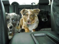 The three Amigoes - in the back! Pets, Animals, Animals And Pets, Animales, Animaux, Animal, Animais