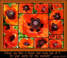 Photo Collage of Poppies with Georgia O'Keeffe quotation