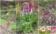 flowering plants in June | wet soil in Perthshire Scotland. centre: Persicaria bistorta 'Superba'