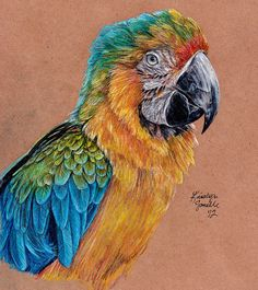 """Color Pencil Drawing Ideas bird color pencil - Bird Drawings : You can draw a bird better, if you get to know them well.One way to improve your bird art is to practice sketching often, remember the saying, """"Practice makes things perfect Bird Drawings, Colorful Drawings, Animal Drawings, Pencil Drawings, Colored Pencil Artwork, Color Pencil Art, Colored Pencils, Bird Sketch, Bird Art"""
