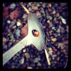 A photo shoot with a ladybird and a spoon