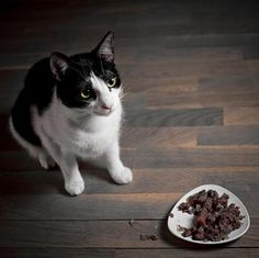 Natural #cat food recipes  #catfood #cattreats
