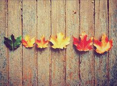 leaves, autumn, and fall image Autumn Day, Autumn Leaves, Fall Winter, Autumn Girl, Fall Season, Tis The Season, Fete Halloween, Autumn Aesthetic, Quote Aesthetic