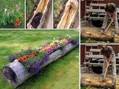 Tree log hollowed out flower bed planter.