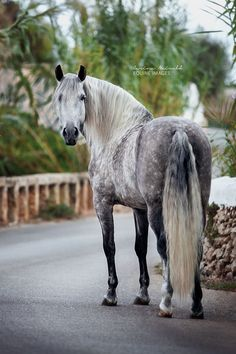 www.pegasebuzz.com | Equestrian photography : Carina Maiwald.