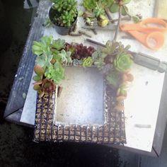 Succulent frame!