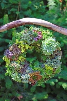 How to make a this stunning succulent wreath with full step-by-step instructions. - j'aime la suspension à la branche - entrée, terrasse, sous un arbre...