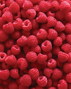 Growing Raspberries for the Whole Family  Long-time love of luscious berries becomes a family project in growing raspberries.