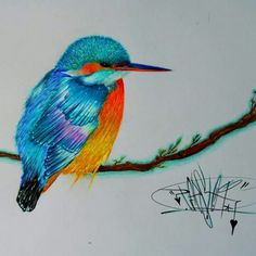 Full Color Bird -Efesto