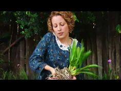 Como prender uma orquídea grande ao tutor - YouTube